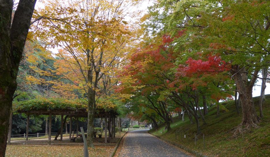 姫路城紅葉